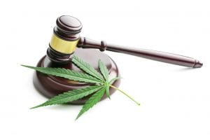 marijuana leaf with gavel